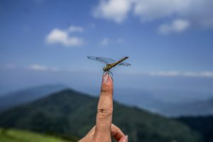 a7IIとSEL1635Zで撮影した武奈ヶ岳頂上でのトンボの写真