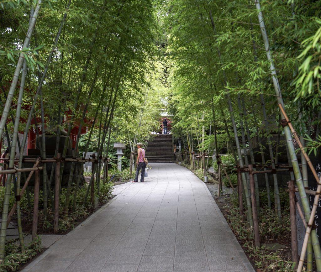 來宮神社の参道。入り口の鳥居から入って1分程の場所から撮影。