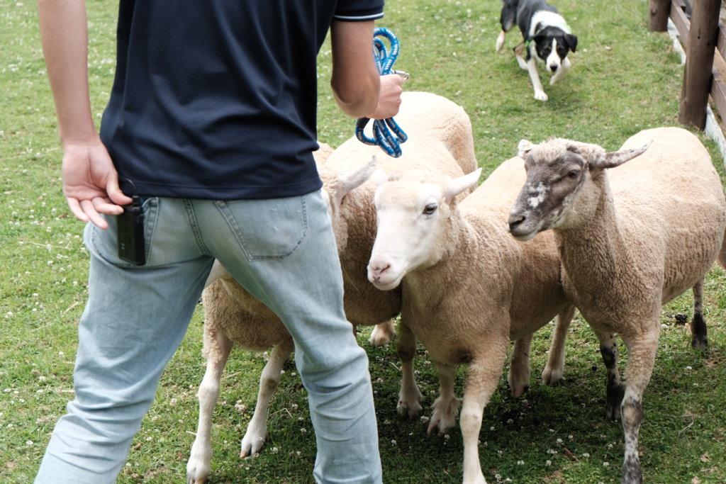 富士フィルム(FUJIFILM)のXT-30で撮影した六甲山牧場の羊飼いの写真