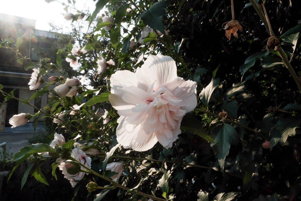 富士フィルム(FUJIFILM)のXT-30で撮影した花の写真